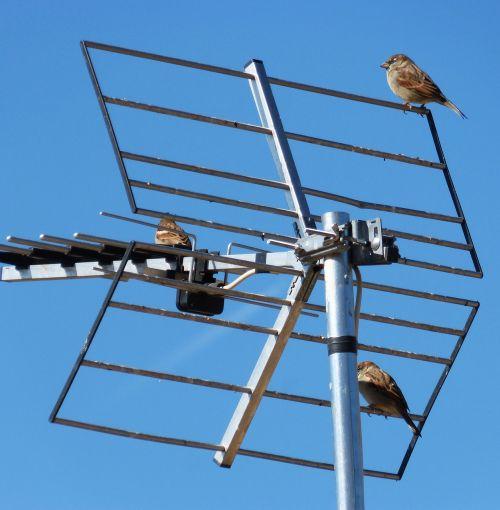 antenna sky sparrows