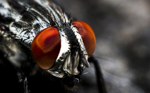 antenna blurred background bug