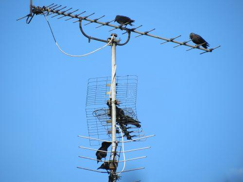 antenna tv antenna reception