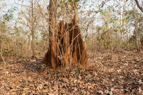 anthill india jungle