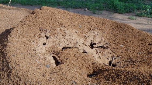 anthill nature ant