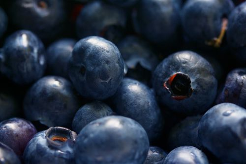 antioxidant berries bilberry