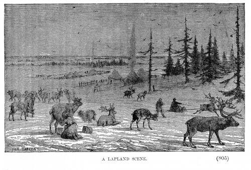 Lapland And Reindeer