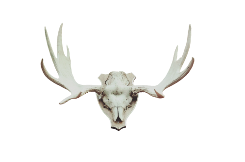 antler moose antler deer antler