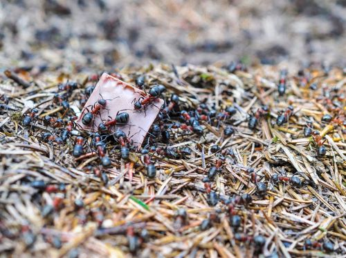 ants ant the anthill