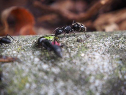 ants ant eat