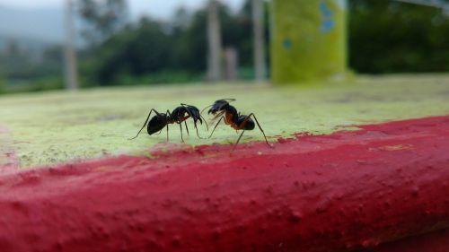 ants chat talk