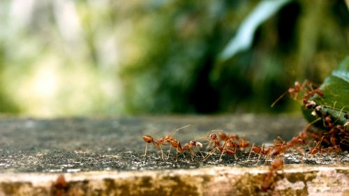 ants ant groups team