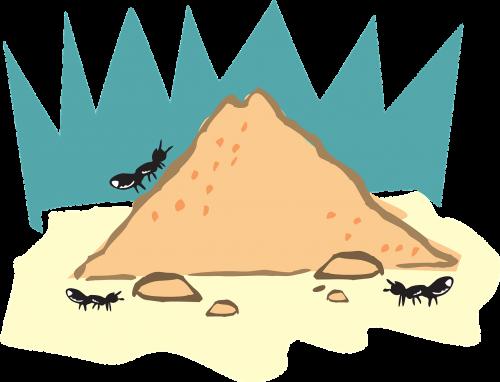 ants sands homes