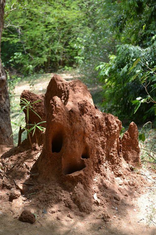 ants nest snake nest danger
