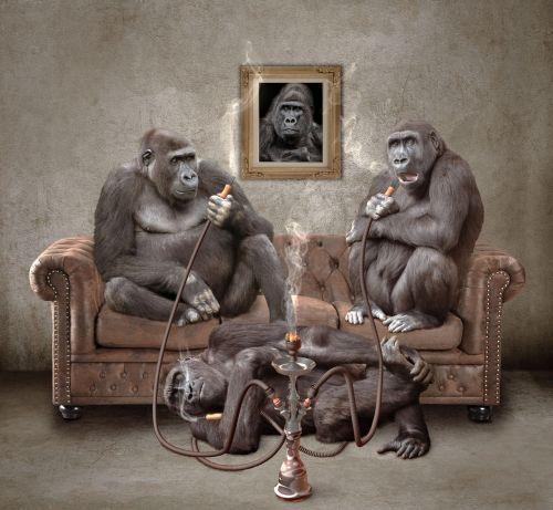 ape hookah shisha