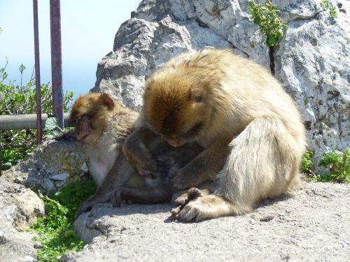 ape body care delouse
