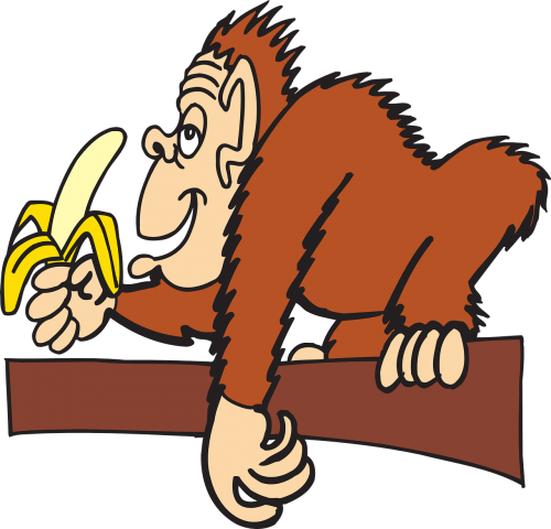 ape branch banana