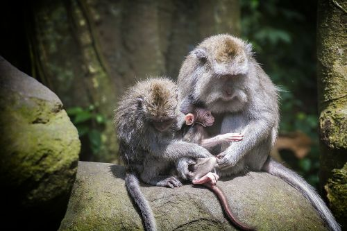ape monkey baby monkey forest