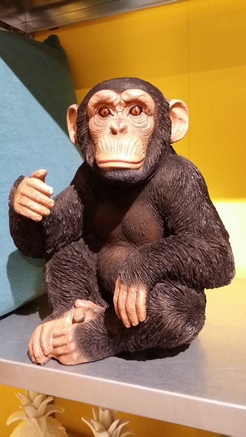 ape on shelving animal shopping