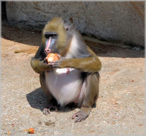 Monkey Business 1 Series 1 - Delicacy