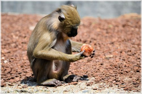 Monkey Business 1 Series 10 - Delicacy