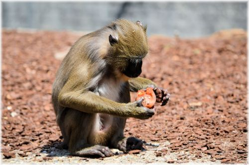 Monkey Business 2 Series 10 - Delicacy