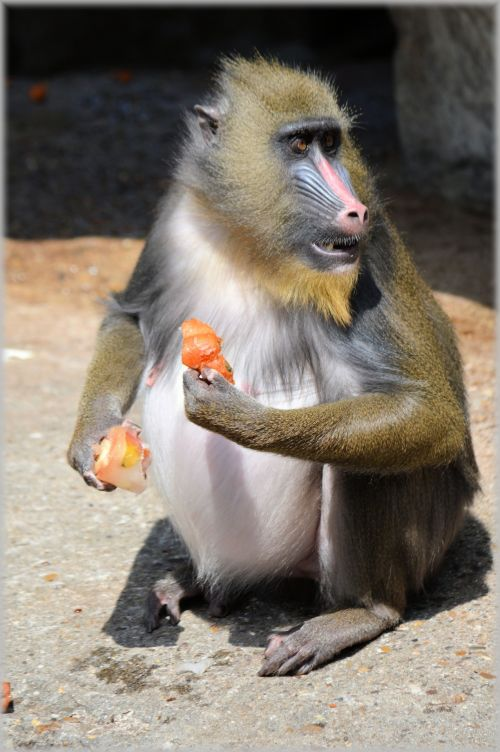 Monkey Business 5 Series 1 - Delicacy