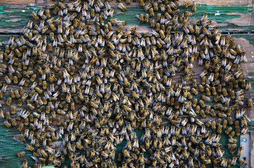 api  the hive  hive