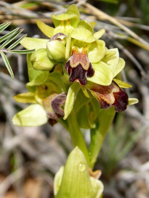 apiary orchid priorat