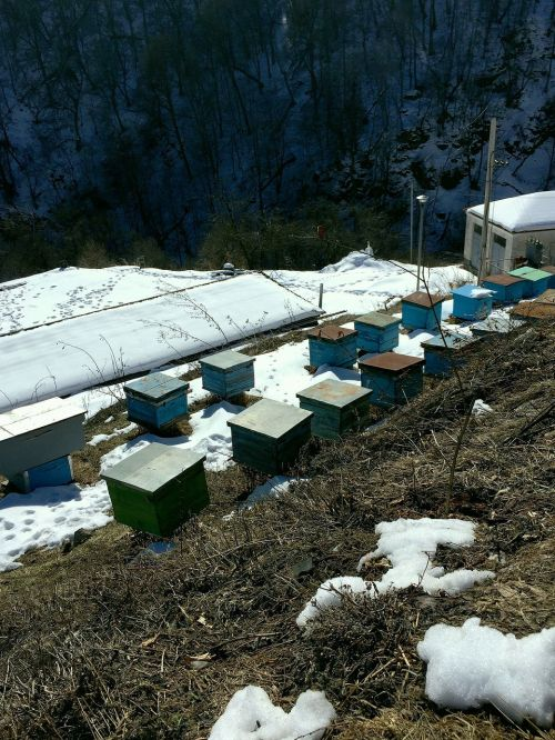 apiary apiary in the mountains apiary in surb haghartsin