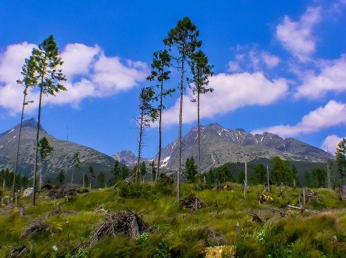 apocalypse mountains trees