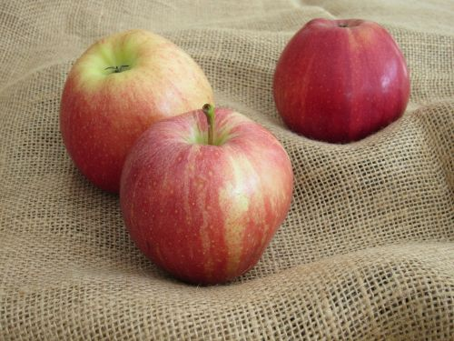 apple harvest fruit