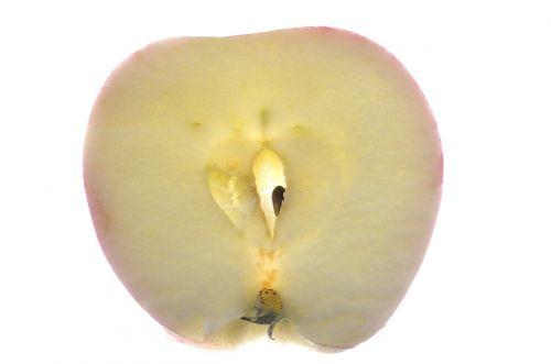 apple macro fruit