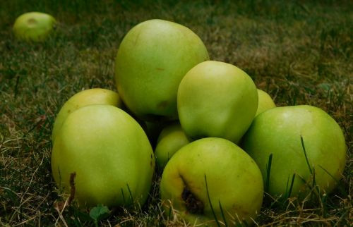 apple fruit fruits