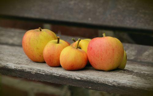 apple goldparmäne fruit