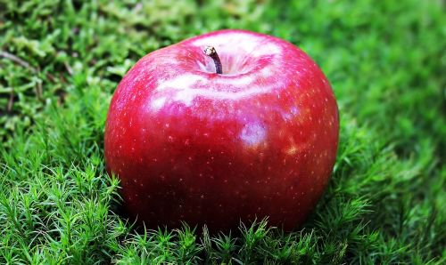apple red apple red chief