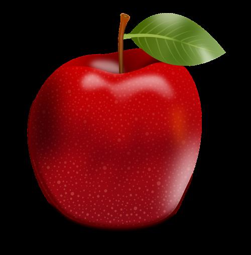 apple apple tree fruits