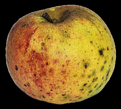 apple garden fruit biological