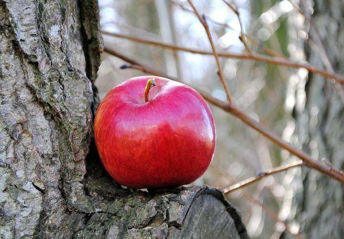 apple fruit vitamins