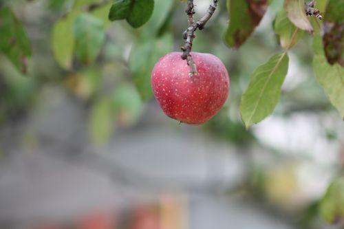 apple sad fruit