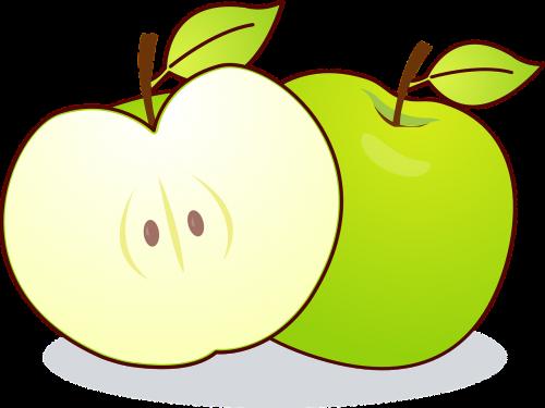 apple malus kernobstgewaechs