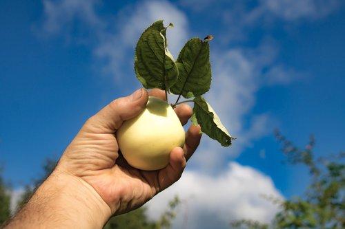 apple  sky  fruit