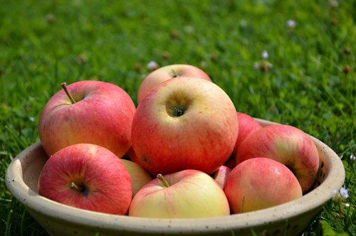 apple  fruit  fruit bowl