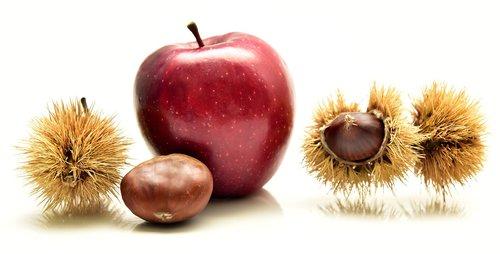 apple  chestnut  eat