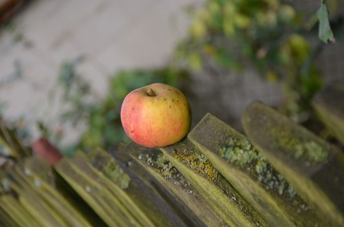 apple windfall fence