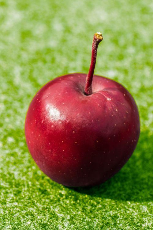 apple red frisch
