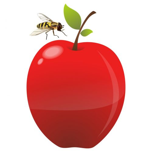 Apple And Hoverfly