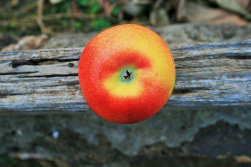 Apple On Wooden Plank