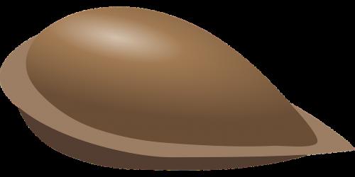 apple seed seed fruit