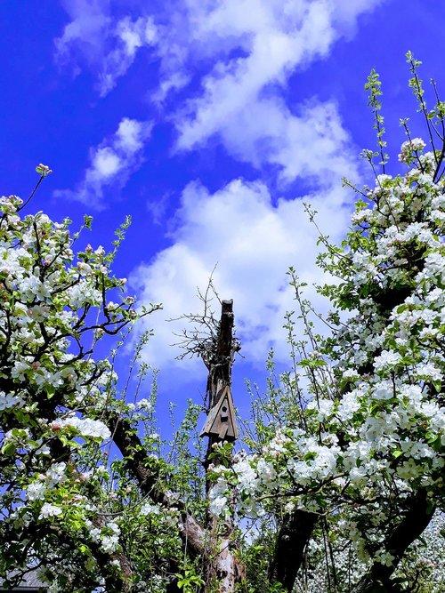 apple tree  aviary  sky