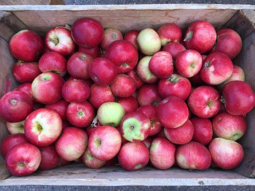 apples farmers market basket