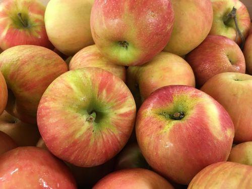 apples honey crisp fresh