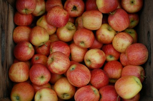 apples crate orchard