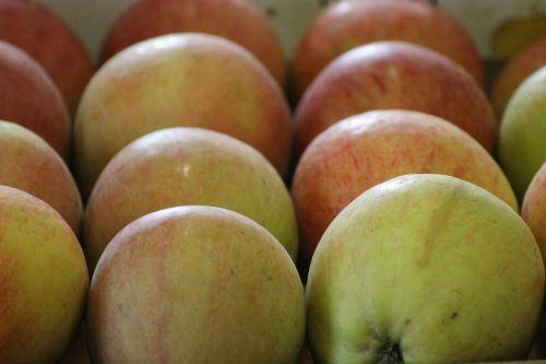 apples fruits foods